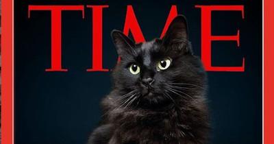 Er photoshopt seine Katze in bekannte Hollywood-Szenen und das Netz feiert ihn dafür