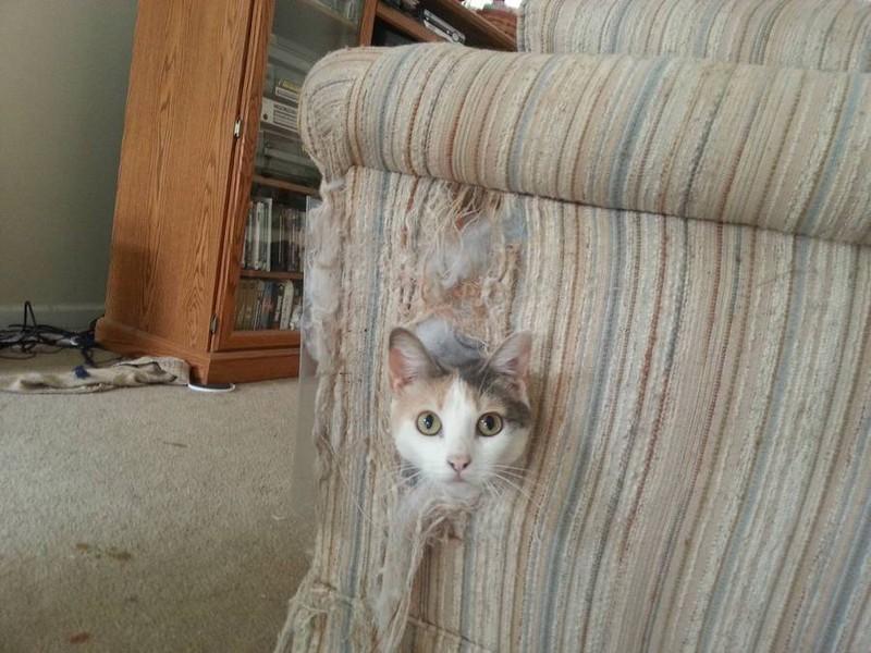 Die Katze ist im Sofa und wurde dabei erwischt.