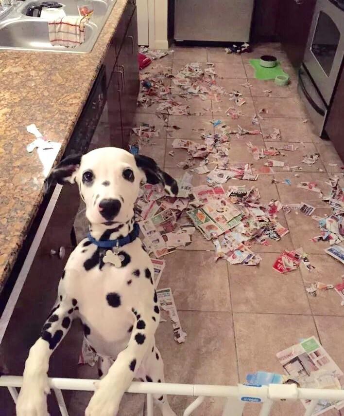 Der Hund hat Konfetti gemacht und wurde dabei auf frischer Tat ertappt.