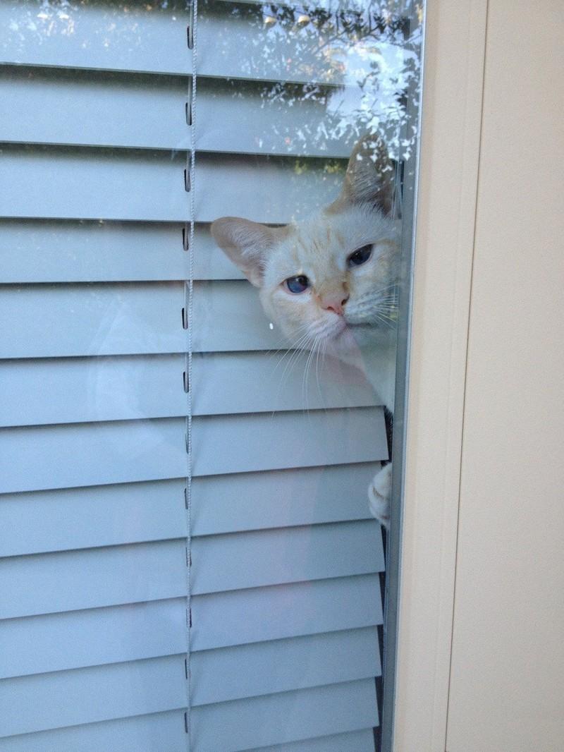 Die Katze beobachtet lustig und wurde dabei erwischt.