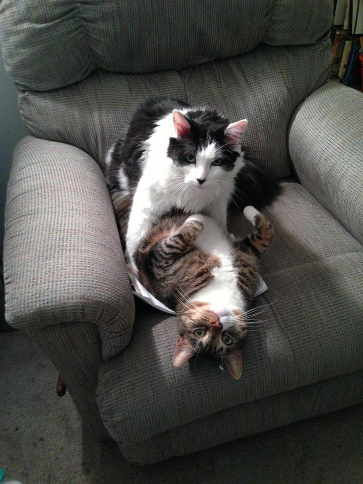 Die Katzen wurden auf frischer Tat ertappt und es ist lustig.