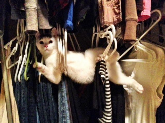 Auf frischer Tat wurde die Katze im Kleiderbügel erwischt und es ist lustig.