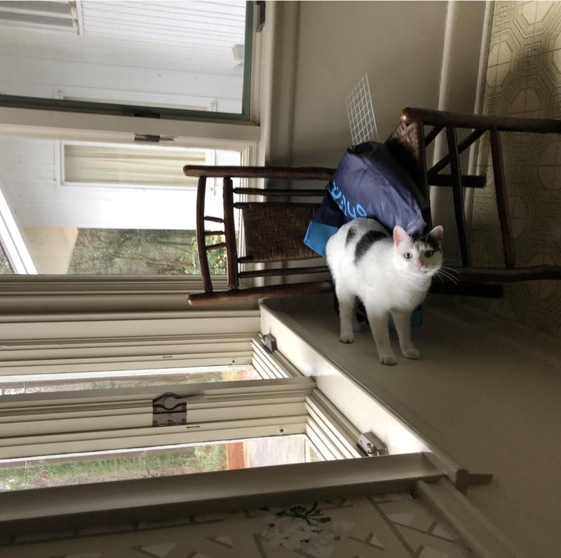 Auf dem Bild sieht es so aus, als würde eine Katze an der Wand entlanglaufen.
