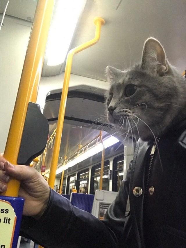 Auf dem verwirrenden Bild sieht es so aus, als ob ein Mann mit Katzenkopf in der U-Bahn steht.