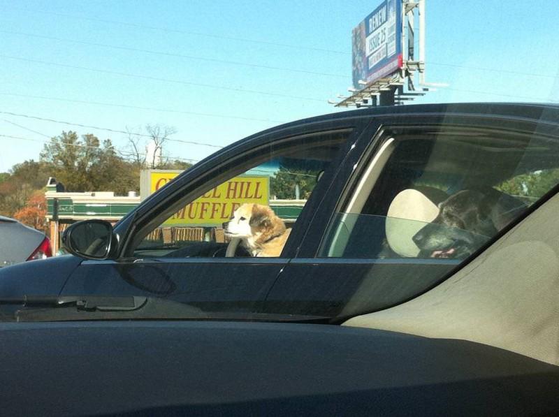 Scheinbar sitzt hier ein Hund am Steuer, ein Bild, das unsere Augen reinlegt.