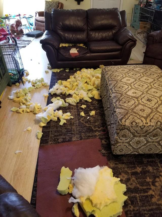 Bei dem Fail hat der Hund das Sofa zerstört.