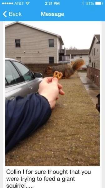 Optische Täuschung, die aussieht wie ein riesiges Eichhörnchen