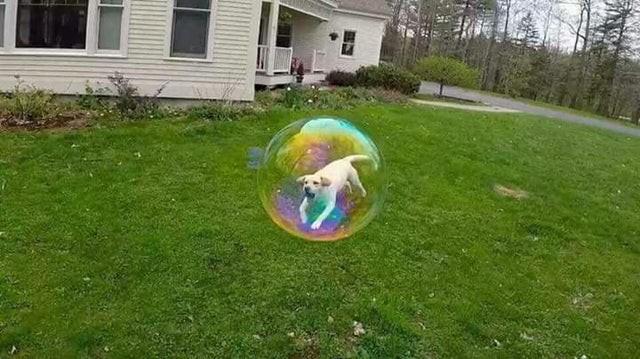Optische Täuschung von Hund in Seifenblase