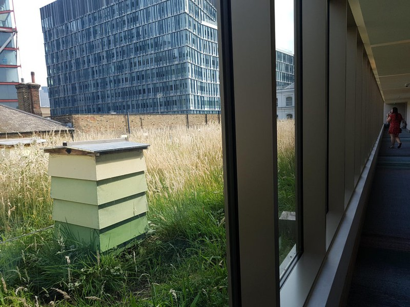 Hotel, das einen Bienenstock direkt vor dem Fenster hat