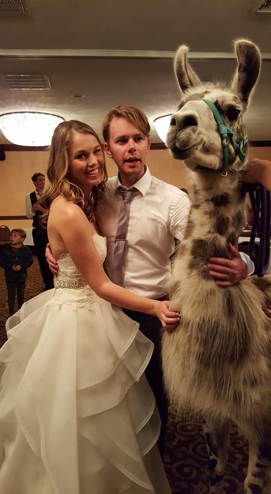 Hotel, dass Lamas und Hochzeiten bereitstellt
