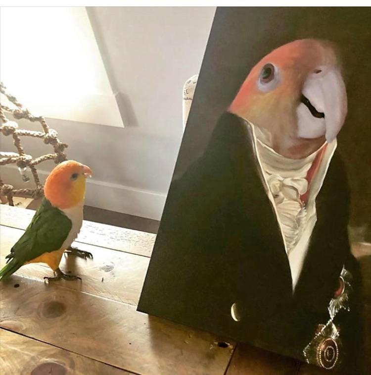 Der kleine Papagei ist genau zum richtigen Zeitpunkt angekommen, um das Werk zu betrachten.