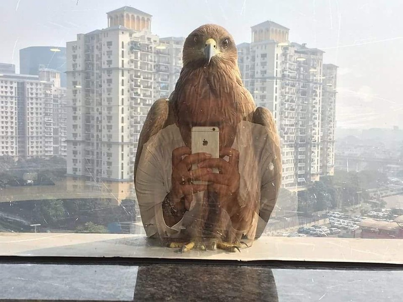 Der perfekte Foto-Moment während sie ein Adler vor das Foto setzte.