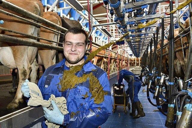 Ein junger Mann wird fotografiert während eine Kuh ihr Geschäft auf ihm verrichtet.