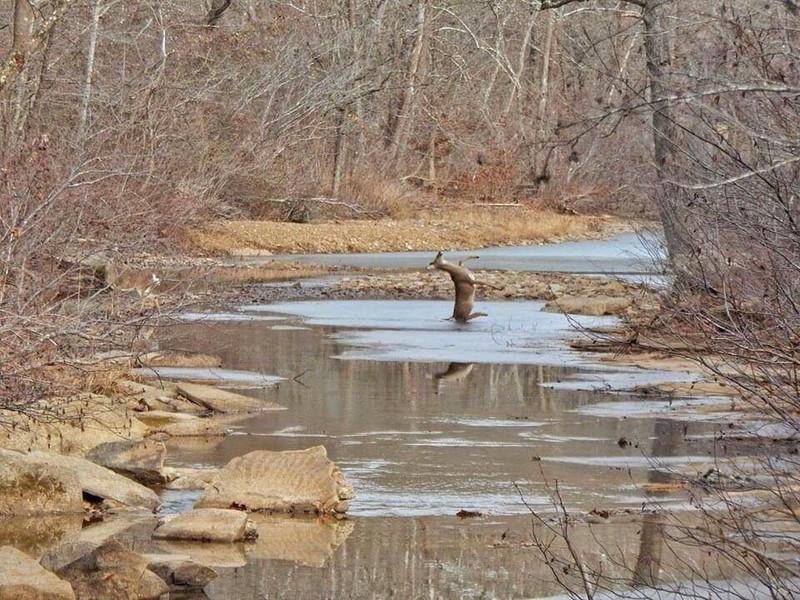 Ein Reh fällt in den See, bzw. ist kurz davor.