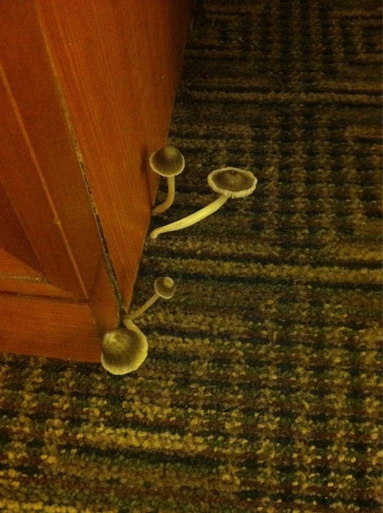 Wenn ein Pilz aus dem Boden sprießt, kann man sicherlich sagen, dass es sich um ein schreckliches Hotelzimmer handelt.