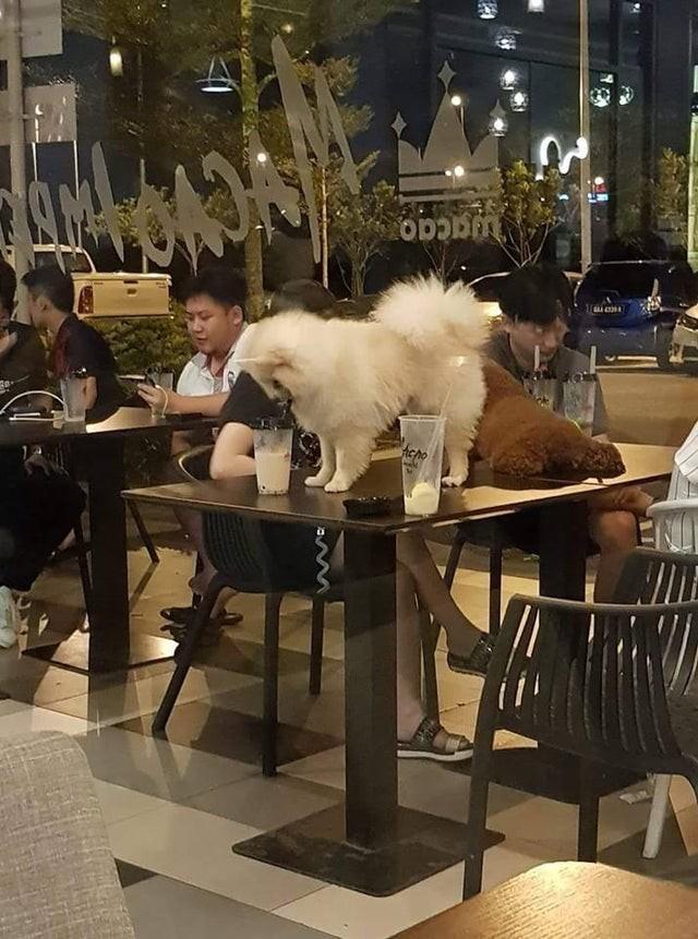 Schlimme Restaurant-Besucher, die ihre Hunde auf einem Tisch stehen lassen