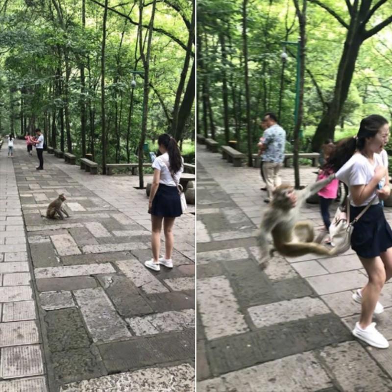 Ein Affe, der sich an die Tasche eines Mädchens hängt