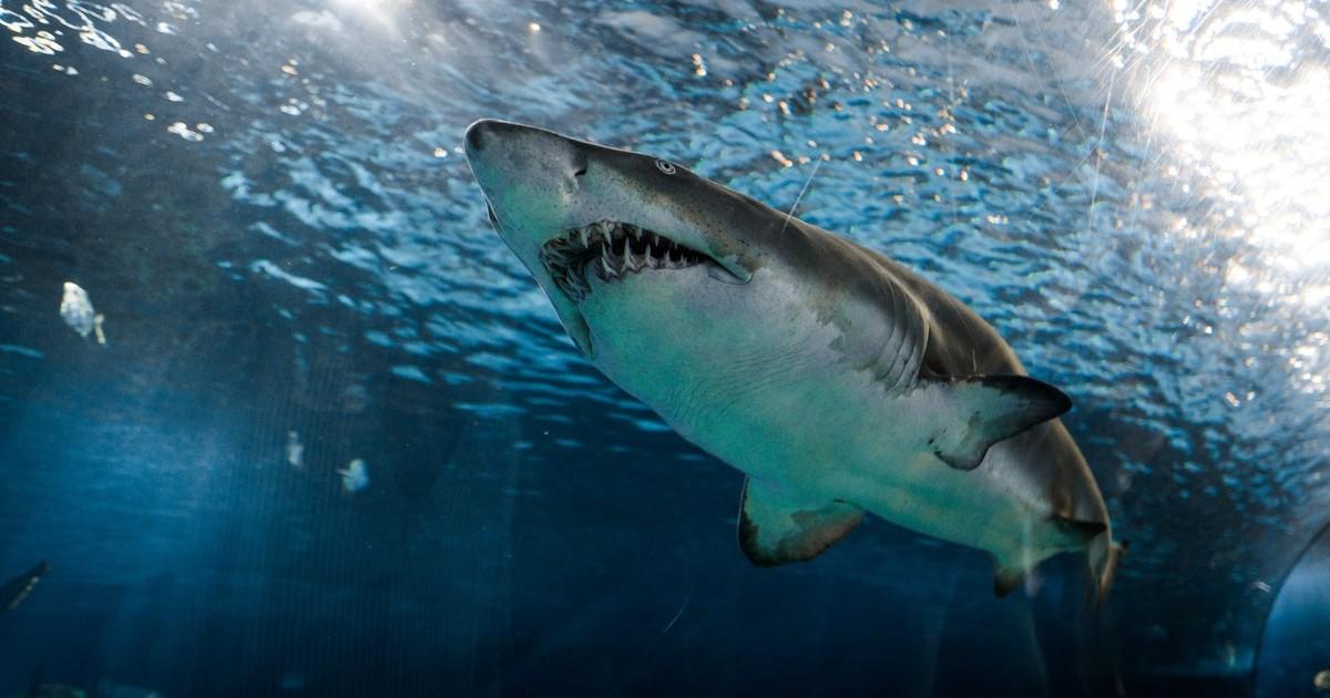 Hai Angriff: Dank seiner Drohne kann der Vater seine Kinder retten