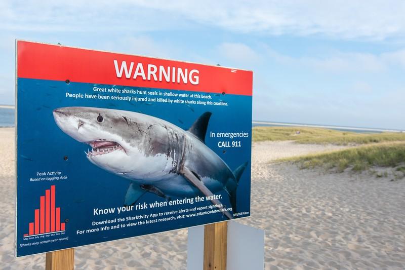 Ein Vater hat seine Kinder Vor einem Hai Angriff gerettet indem er den Hai mit der Drohne gesehen hat