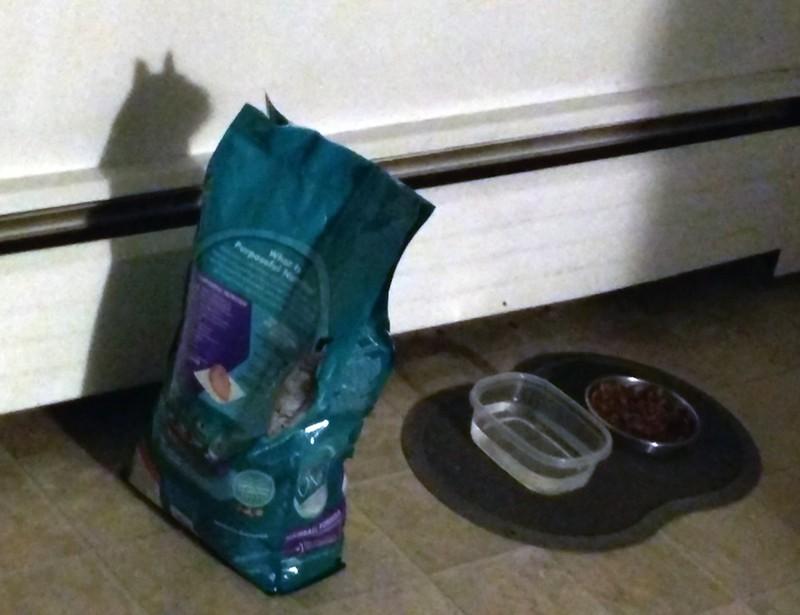 Eine Katzenfutterverpackung dessen Schattenbild genau aussieht wie eine Katze.