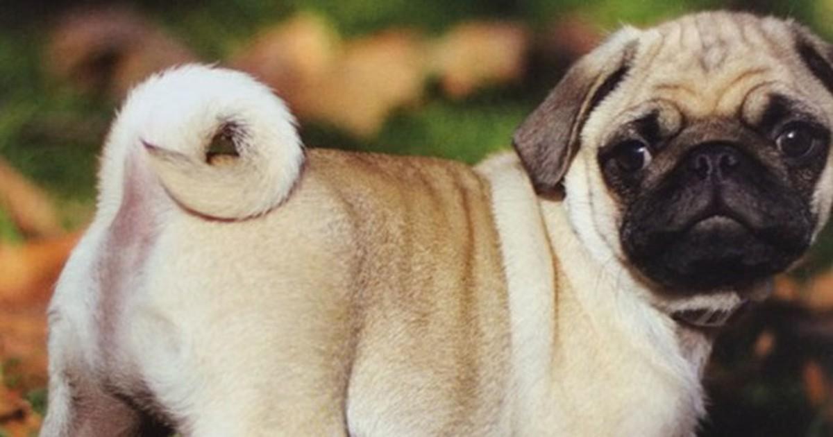 15 Photoshop Fails, die so offensichtlich sind, dass es weh tut