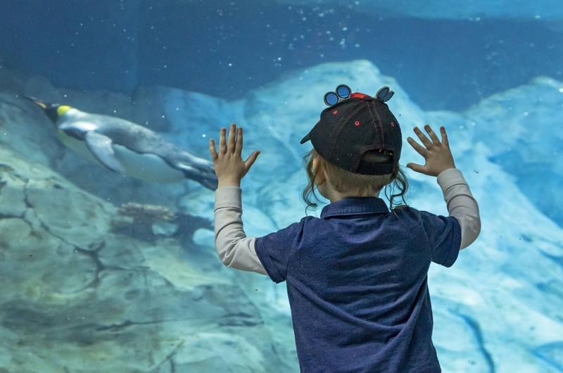 Die Pinguine im Zoo Detroit sollte man nicht bedrohen