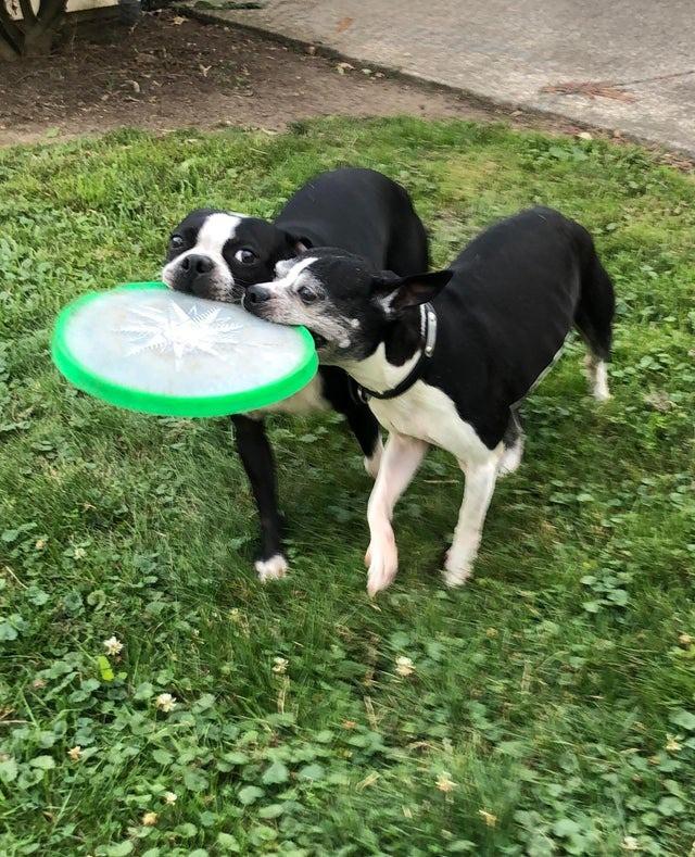 Hunde finden die Hitzewelle bestimmt ebenso wenig lustig, wie wir Menschen.