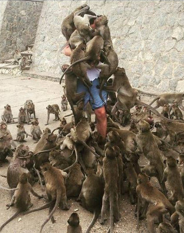 Dem Mann wird es leidtun, dass er einen Affen füttern wollte.