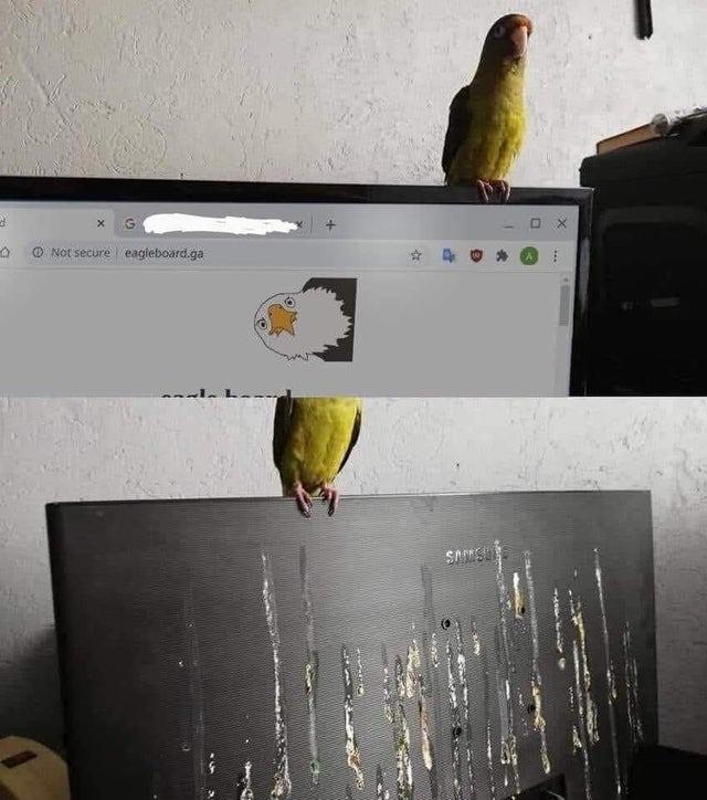 Wenn der Vogel auf dem Computer Hinterlassenschaften hinterlässt.