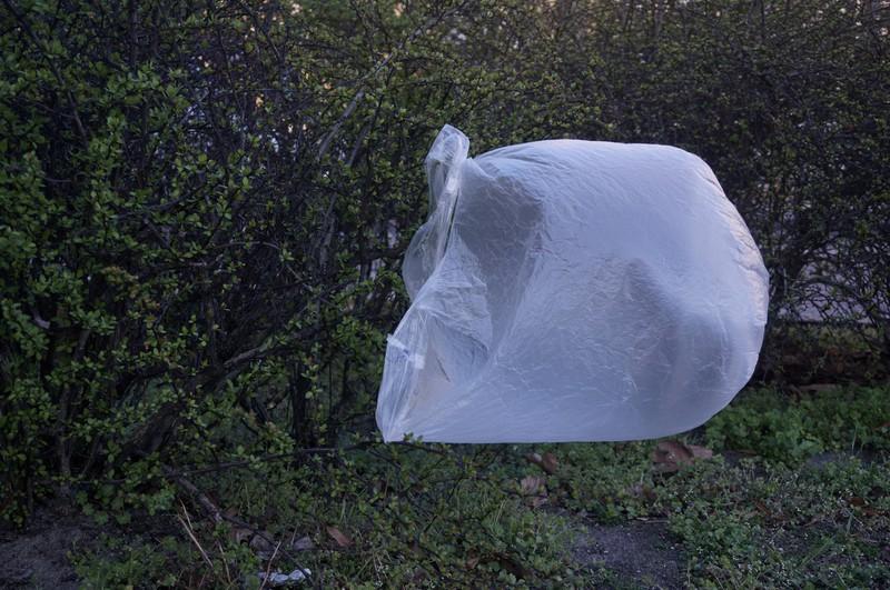 Die Plastiktüte kam im Traum vor.