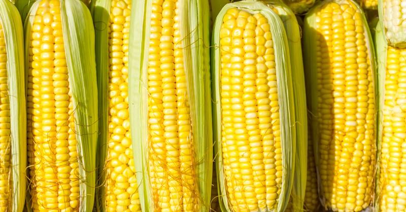 Das Kind hat heimlich den Mais versteckt und die Mama kannte sein Geheimnis