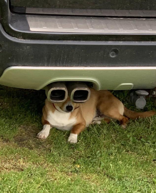 Hund unter dem Auspuff