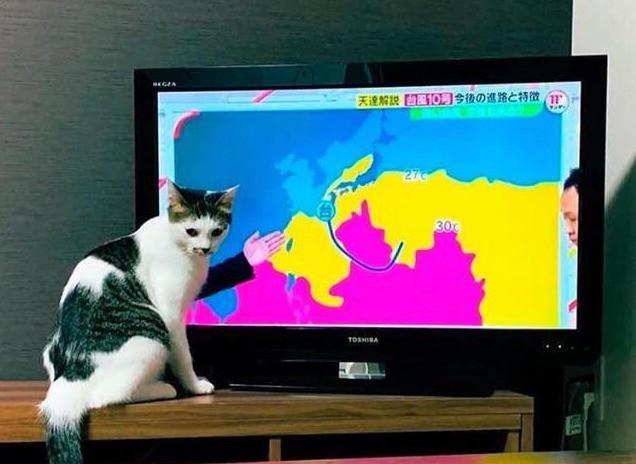 Katze, die das Wetter vorhersagt