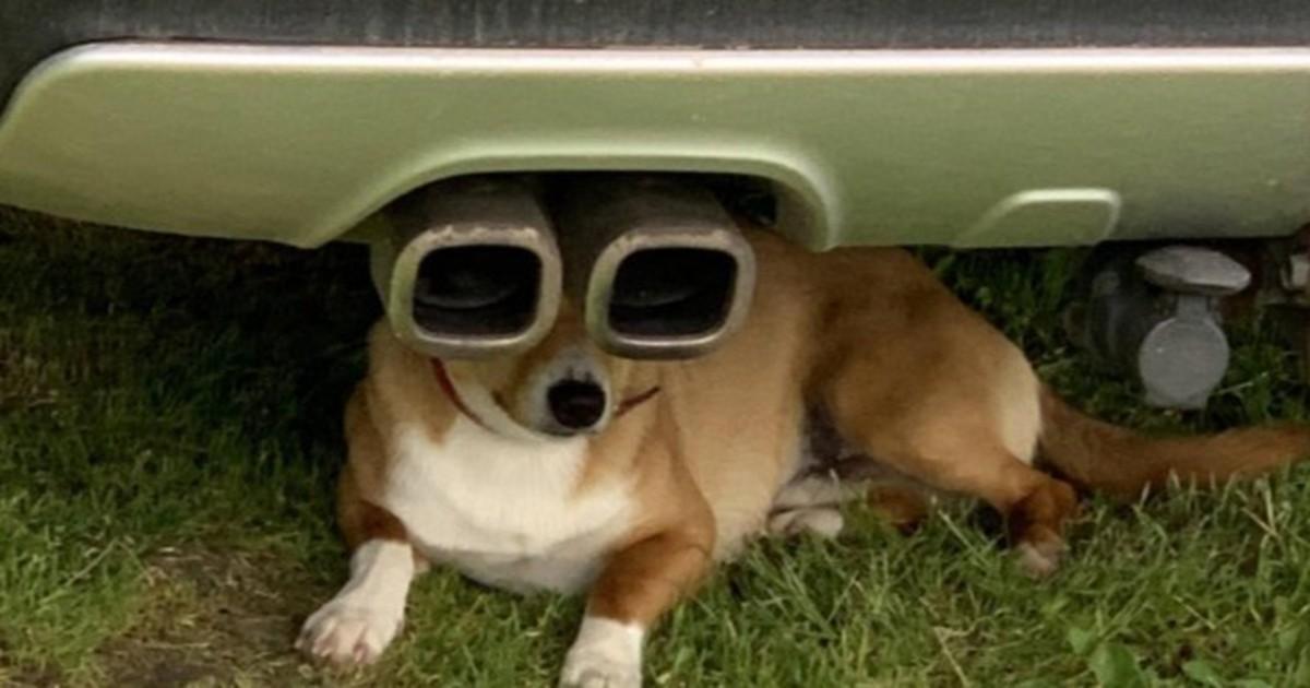 Optische Täuschung Teil 2: Bei den Bildern musst du zweimal hinsehen