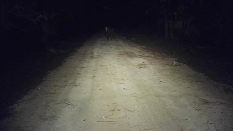 Ein Mann sah einen Bullen nachts auf der Straße