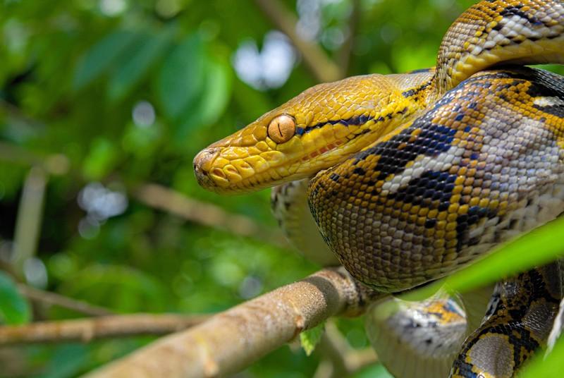 Eine Abbildung von einer Schlange in den Ästen