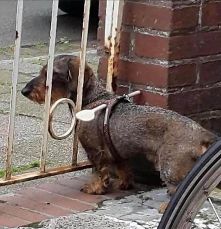 Einer kleiner Hund steht am Zaun