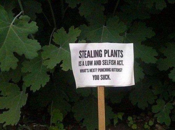 Netter Hinweis an den Pflanzendieb